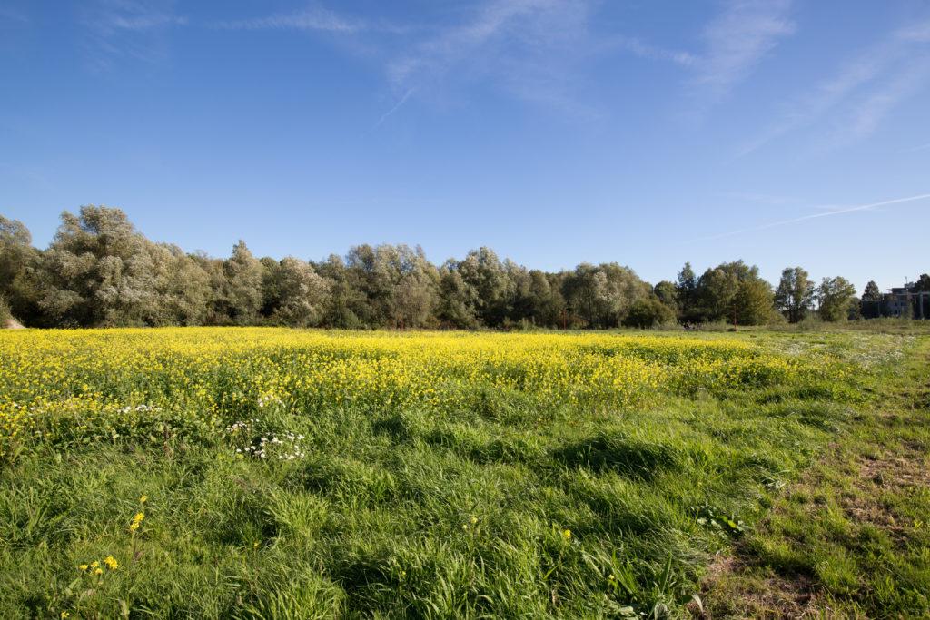 Biodiversiteit bedreigd dor stikstofuitstoot